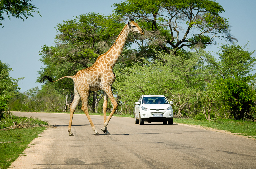 Il Kruger Park in auto